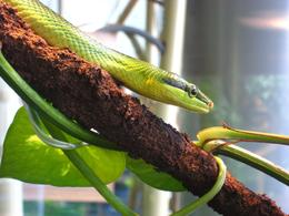 Watching the snakes maneuver in their environment - November 2009
