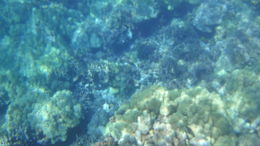 Photo of Big Island of Hawaii Zodiac Raft and Snorkel Adventure Picture taken at the diving point