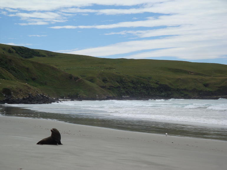 Seal in the bay -
