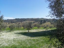 The view from the abbey at San Antimo where we heard the monks doing a Gregorian chant. , Marsha M - March 2014