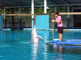 Trainer with one of Sentosa's famed performing 'pink' dolphins. , Rusty - December 2014