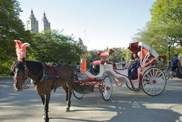 Photo of New York City Private Horse and Carriage Ride in Central Park Horse and Carriage Ride