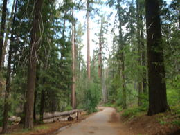 Photo of San Francisco Yosemite National Park and Giant Sequoias Trip SAN FRAN 448