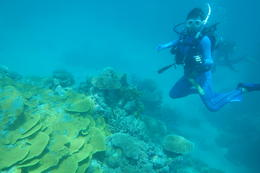 Swimming along the Great Barrier Reef. The only way to view it. , Eric C - January 2015
