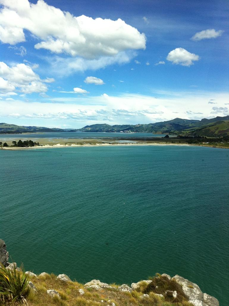 Albatross Colony -