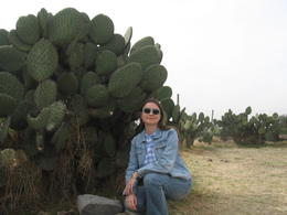 There are a lot of cacti there. , Olga N - December 2014