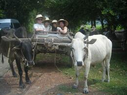 Photo of Bangkok Khao Yai National Park and Elephant Ride Day Trip from Bangkok Cattle Drawn Cart Ride