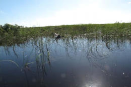 Photo of Fort Lauderdale Florida Everglades Airboat Adventure and Wildlife Encounter Ticket Florida06.jpg