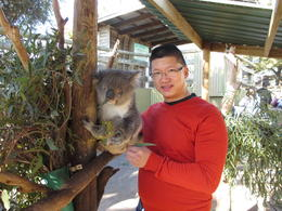 This is me taking part in the Koala encounter (for an additional fee). , James Fong - August 2013