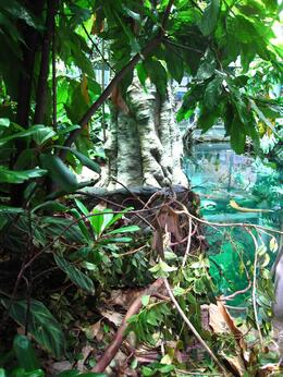 Photo of San Francisco Skip the Line: California Academy of Sciences General Admission Ticket Native trees of the rainforest