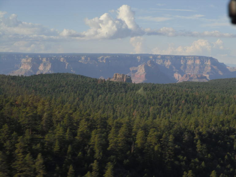 �berflug des Waldes - Grand Canyon National Park