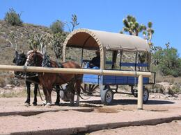 Photo of Las Vegas Grand Canyon Helicopter and Ranch Adventure Covered Wagon