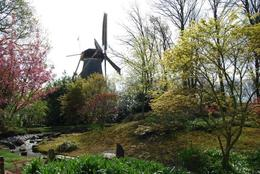 Photo of Amsterdam Keukenhof Gardens and Tulip Fields Tour from Amsterdam Keukenhof Garden