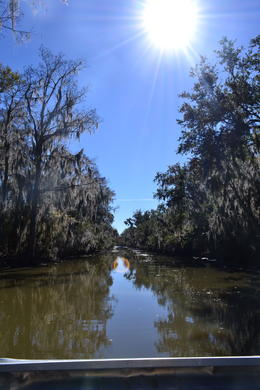 Photo of New Orleans Small-Group Airboat Swamp Adventure and Plantation Tour from New Orleans The beautiful swamp
