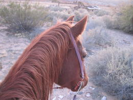 Photo of Las Vegas Wild West Sunset Horseback Ride with Dinner Julie!