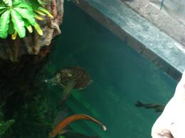 Easy to see the turtles and large marine life in the open top aquarium tanks - November 2009