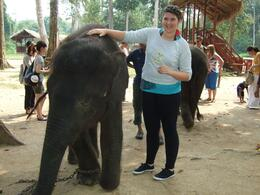 Photo of Kuala Lumpur Private Tour: Elephant Orphanage Sanctuary Day Tour from Kuala Lumpur Who's a good boy!