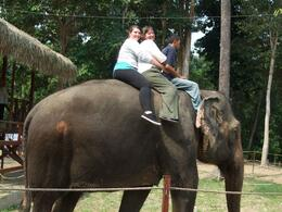 Did not realize we would have to ride bare back. I was hanging onto the man (the elephant trainer) in front for dear life., Janet T - August 2009