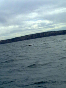 Photo of Sydney Sydney Whale-Watching Cruise Including Lunch Whale of a time