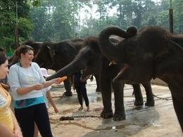 Photo of   Elephant feeding time