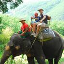 Photo of Phuket One-Hour Elephant Jungle Trek from Phuket Elephant Jungle Trek