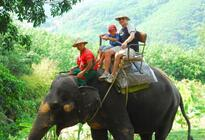 Photo of Phuket One-Hour Elephant Jungle Trek from Phuket