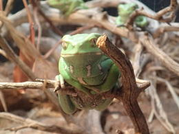 Photo of San Francisco Skip the Line: California Academy of Sciences General Admission Ticket Frogs, frogs, everywhere