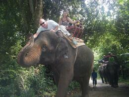 Photo of Bangkok Khao Yai National Park and Elephant Ride Day Trip from Bangkok Handshake (sort of!)