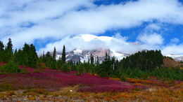 Mt Rainier in the fall - short hiking from the visitor center , Adrienn F - September 2015