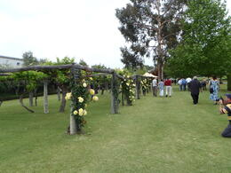 Photo of Perth Swan Valley Wine Cruise from Perth Swan River Cruise
