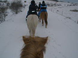 Photo of Reykjavik Viking Horse-Riding Tour and Blue Lagoon from Reykjavik Viking Horse Ride