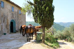 The stables... , Lidia - July 2011