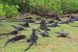 Photo of Galapagos Islands Galapagos Islands Explorer Package from Santa Cruz Island Iguanas