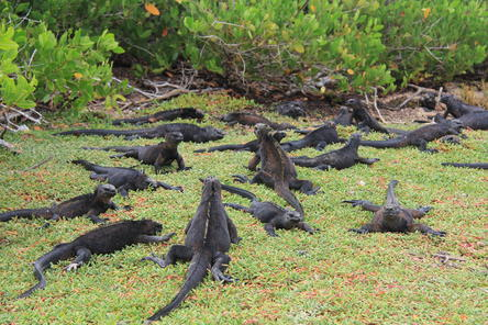 Galapagos Islands Explorer Package from Santa Cruz Island - Galapagos ...