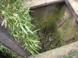 Photo of Ho Chi Minh City Cu Chi Tunnels Small Group Adventure Tour from Ho Chi Minh City One of the booby traps