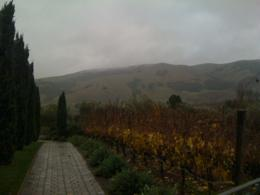 Photo of San Francisco Napa and Sonoma Wine Country Tour Beautiful scenery!