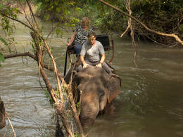 Photo of Bangkok Khao Yai National Park and Elephant Ride Day Trip from Bangkok Mahout Dave