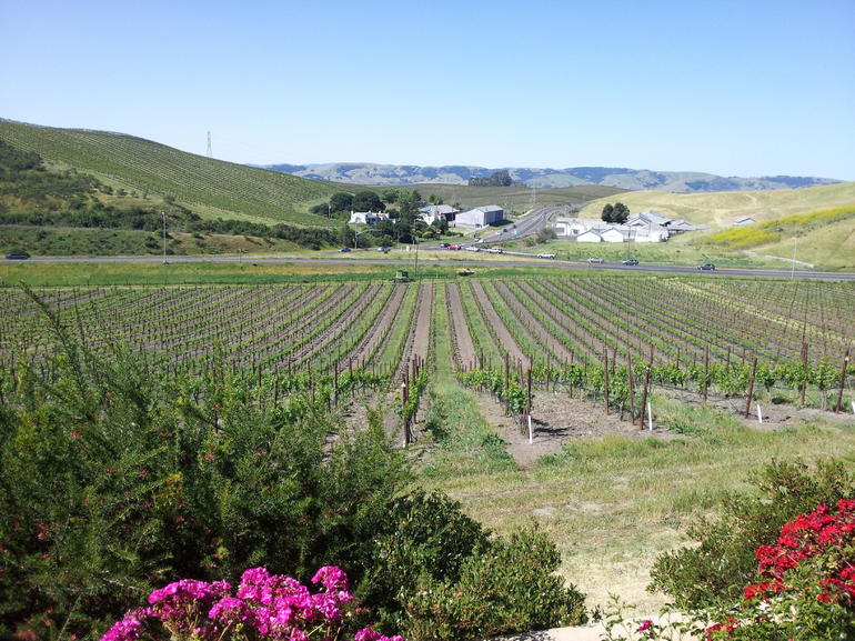 Nicholson Ranch Winery. - San Francisco