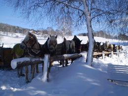 The horses that pulled our sleighs , Jan B - January 2013
