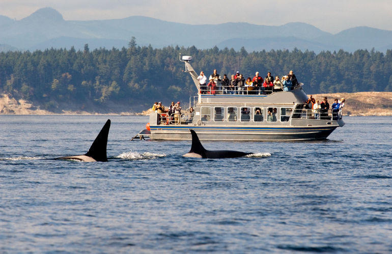 Whale Watching - Victoria