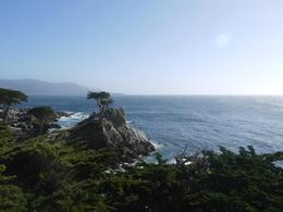 Photo of San Francisco Monterey, Carmel and 17-Mile Drive Day Trip from San Francisco Lone Cyprus