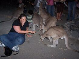 I feed a small mob of kangaroos during Bush Tea at the Cairns Night Zoo., Jamie W - June 2008