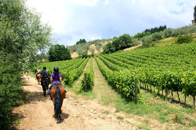 Horseback riding in Tuscan countryside: The vines...