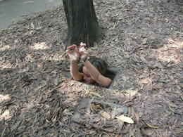Photo of Ho Chi Minh City Cu Chi Tunnels Small Group Adventure Tour from Ho Chi Minh City Secret Entrance