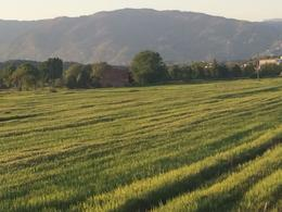 Photo of Florence Tuscany in One Day Sightseeing Tour Wheat FIelds of Tuscany