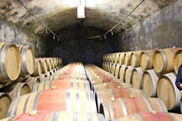 Barrels in the cellar of the winery , Lidia - July 2011