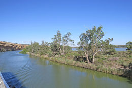 Photo of   On the Murray