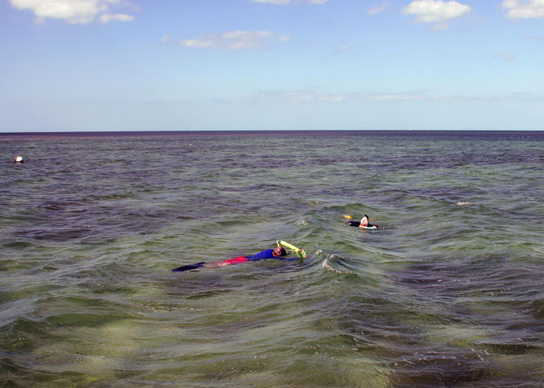 Snorkeling above the sponge fields with Captain Noah and Tess's watch!! - Key West