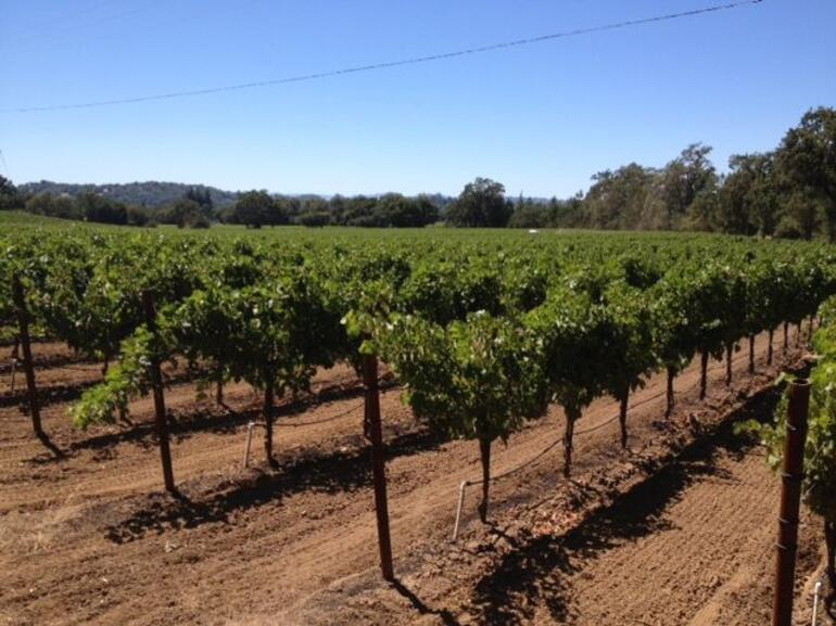 View from the wine carriage - Napa & Sonoma