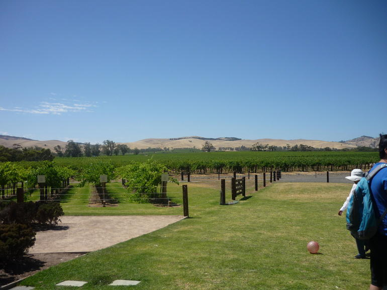 Grape vines at the winery - Adelaide